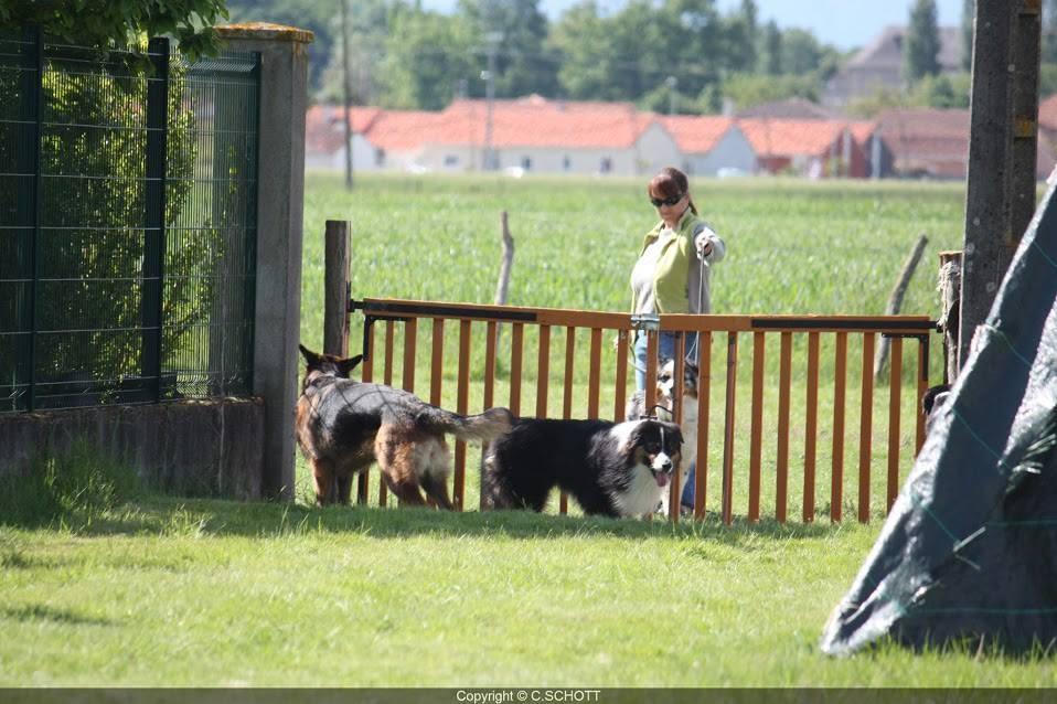 présentation des chiens au portail: ce travail nous permet de prendre des informations sur le comportement du chien face à ses differents congénères. Il nous permet aussi de travailler sur la gestuelle et les déplacements du maître
