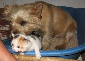 Hund und katz münchen