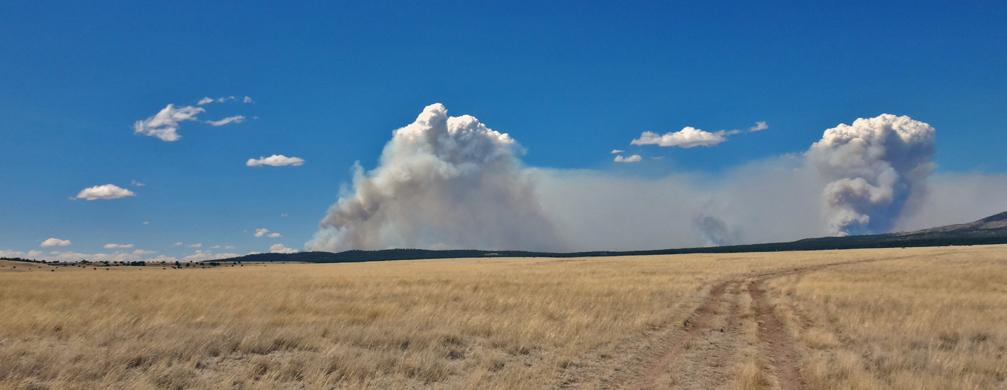 les incendies de forêt...