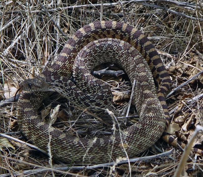mon premier serpent