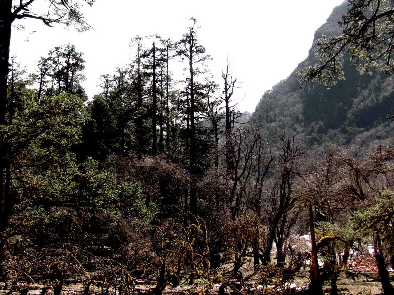 forêt en descendant du col