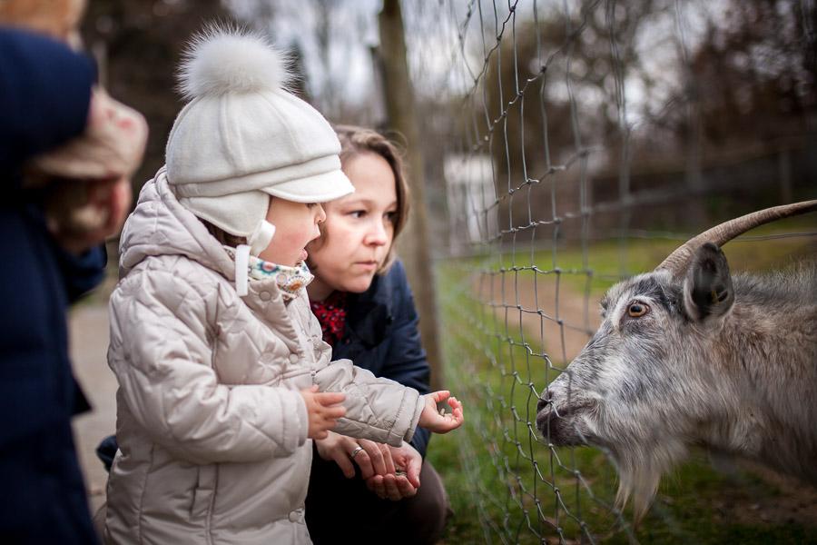 Ein kleines Mädchen füttert im Tierpark eine Ziege. Familienfotos Freising, Familienfotos München