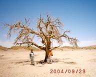 Wüsten in unseren Herzen - Wüsten auf diesem Planeten