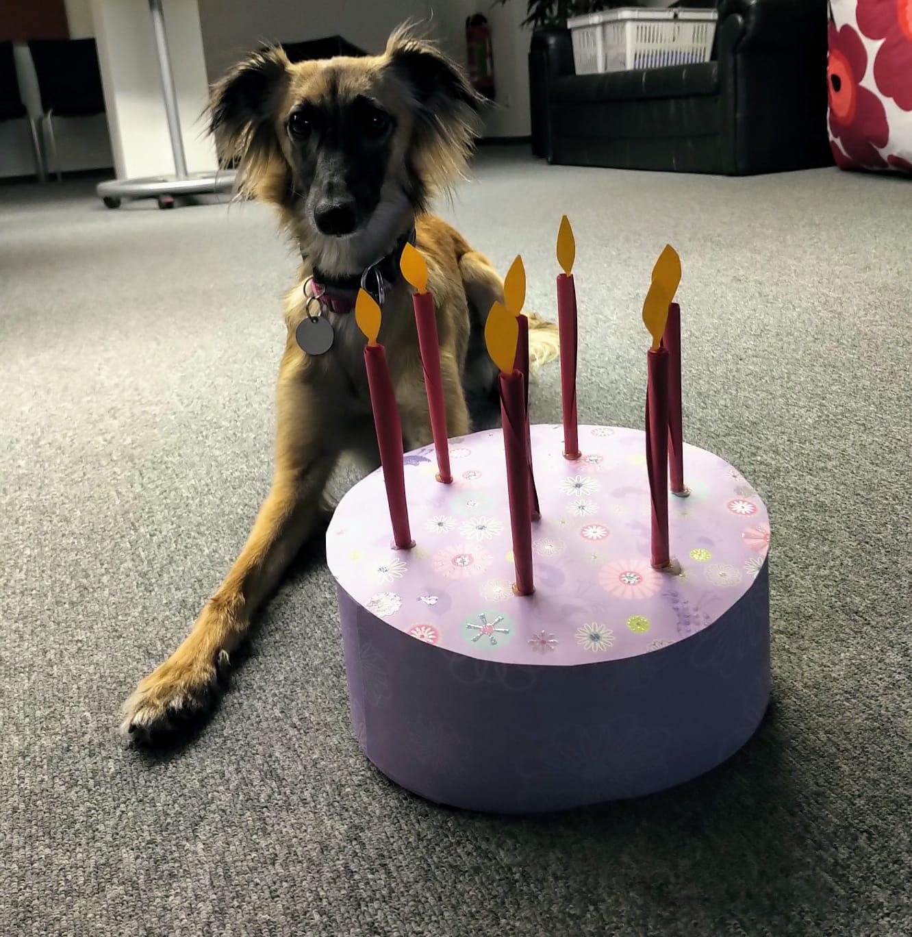 2.  Geburtstag des E - Wurfes