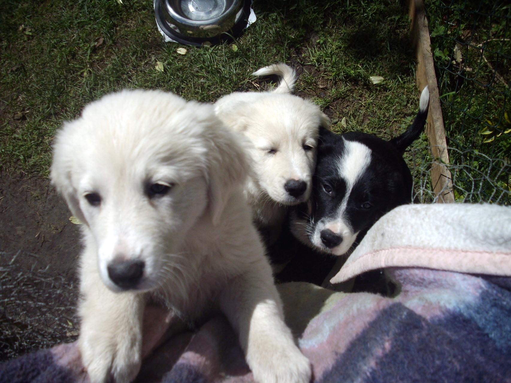 Unsere Hunde Windhunde Von Eichenwind Silken Windsprite Zucht