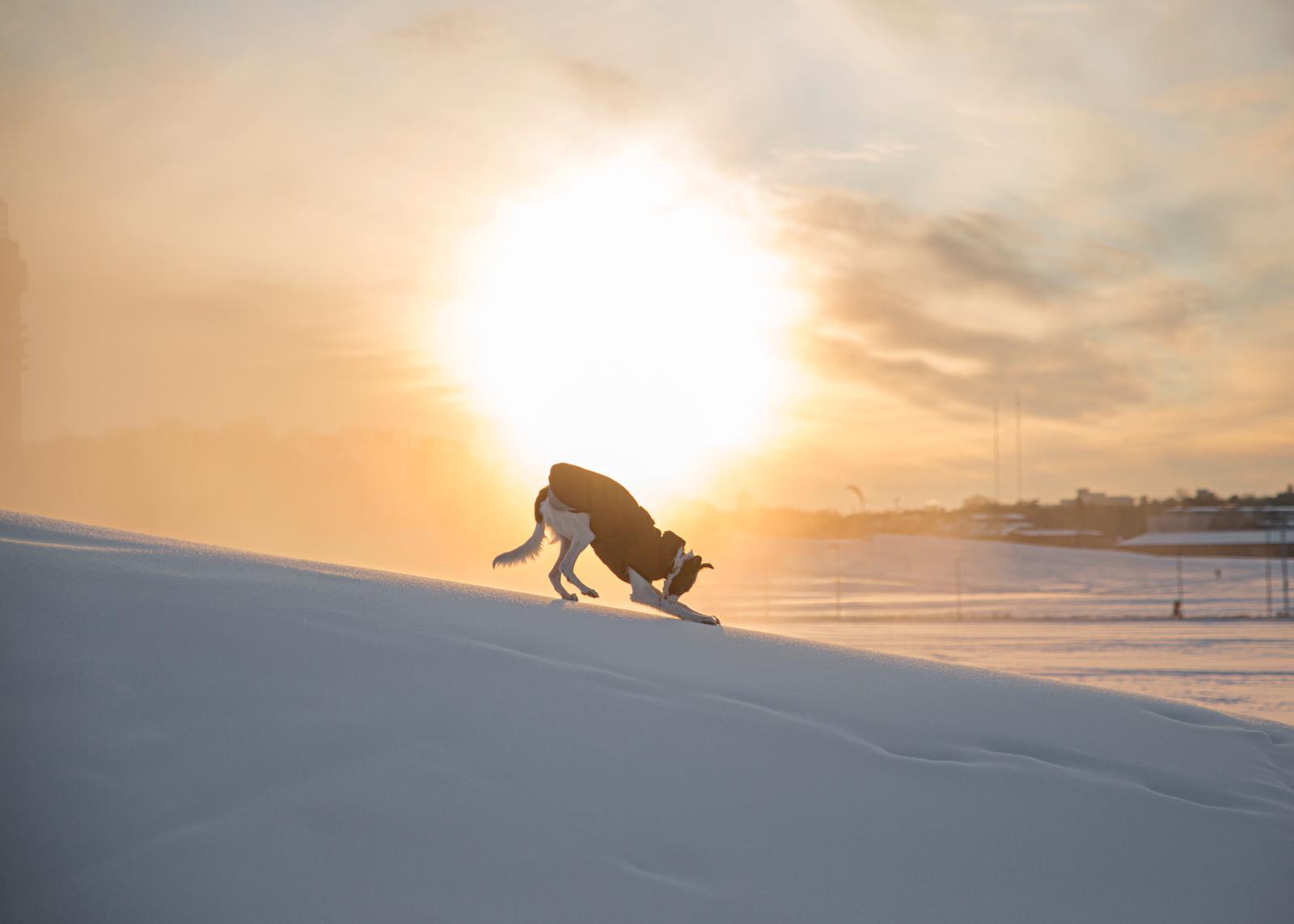 Schnee ohne Ende und große Freude