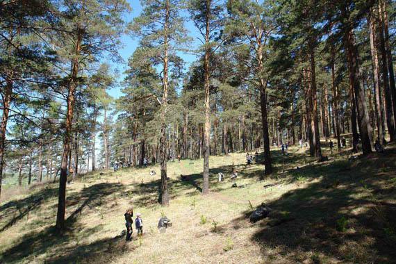 За 7 лет работы высажено около 100 000 деревьев
