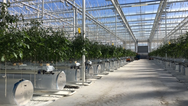 Horticulture and greenhouses