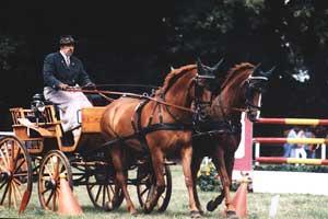 Fahrdressurprüfung (Pferde: Erle & Anette)