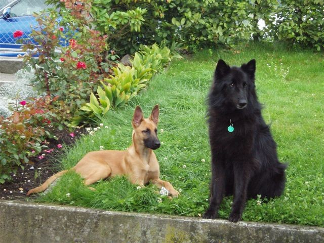 Wolt et Luna