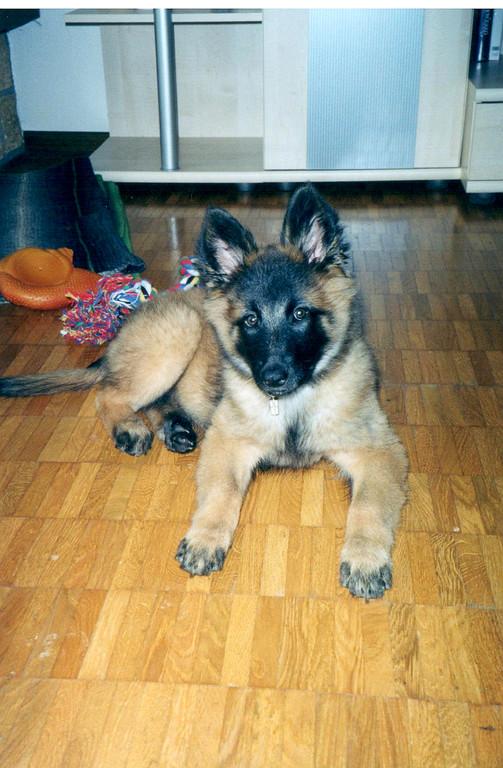 Ma première chienne Kalypso