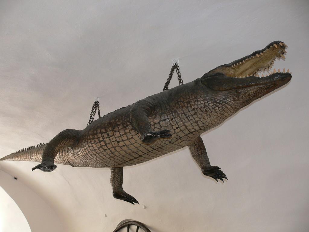 Krokodil im Rathausturm FZ30