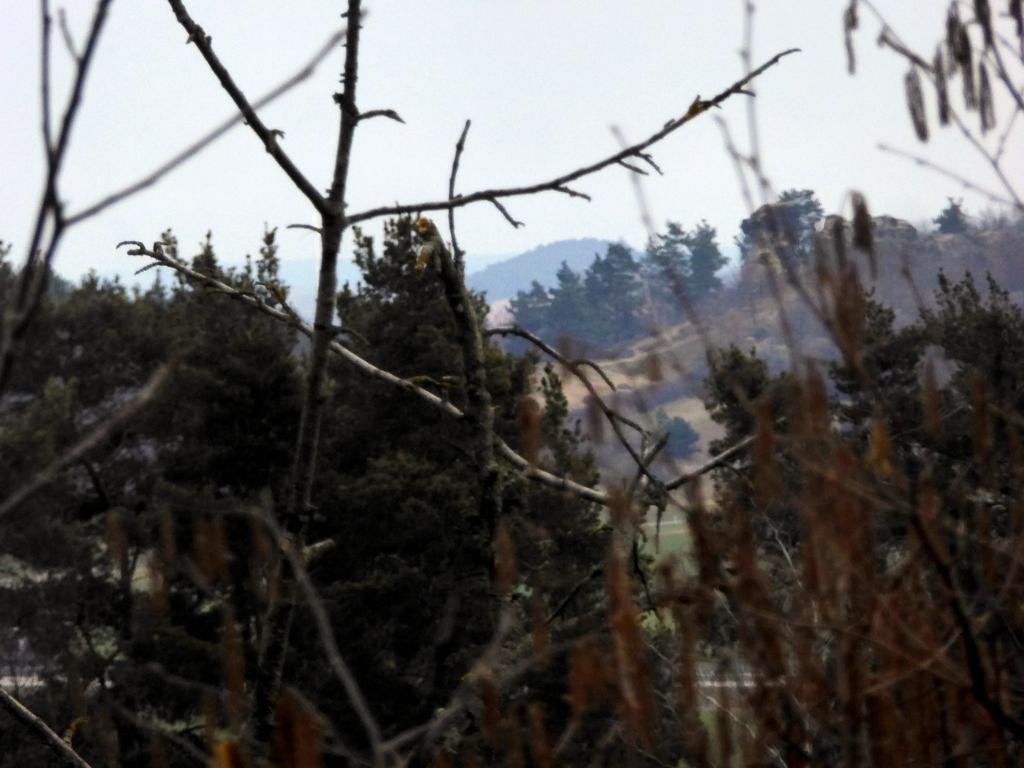 Der Blick von der Standfläche aus nach Osten zum Lehofberg, am Königstein vorbei