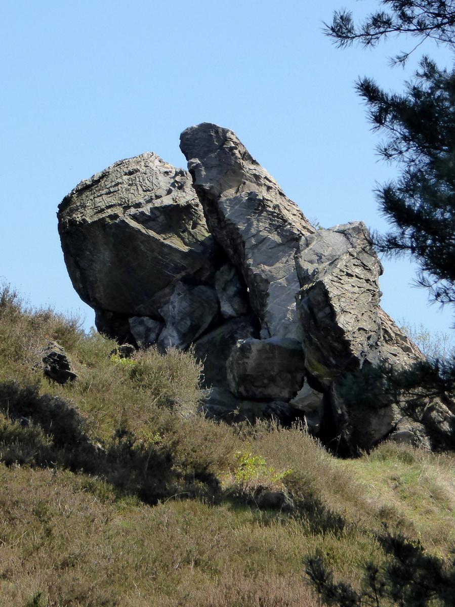 Das kleine Kamel auf dem Langenberg (Foto 2)