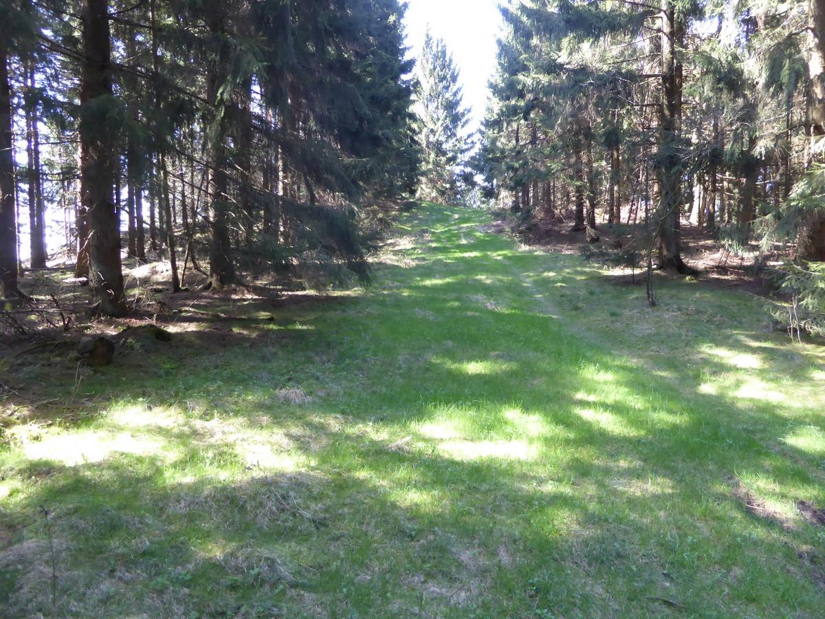 Es geht über einige Waldwege