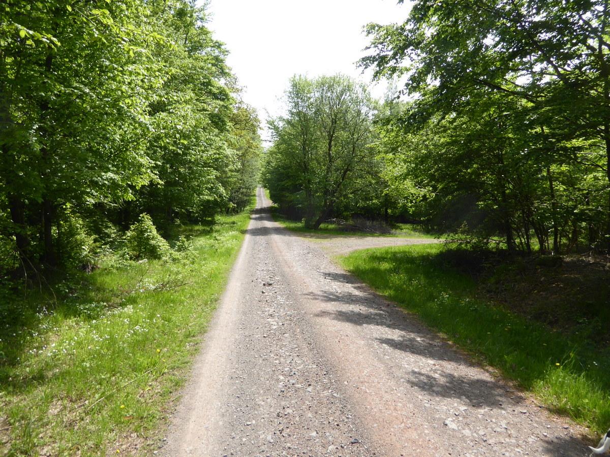 Die lange Forststraße durch den Wald im Sommer- leider ohne jeden Durchblick