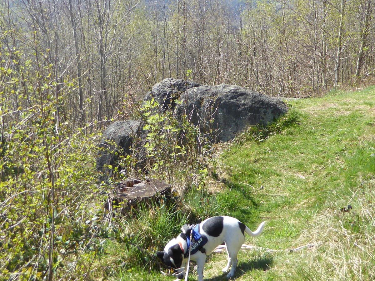 Der kleine Hund vor dem kleinen Fels