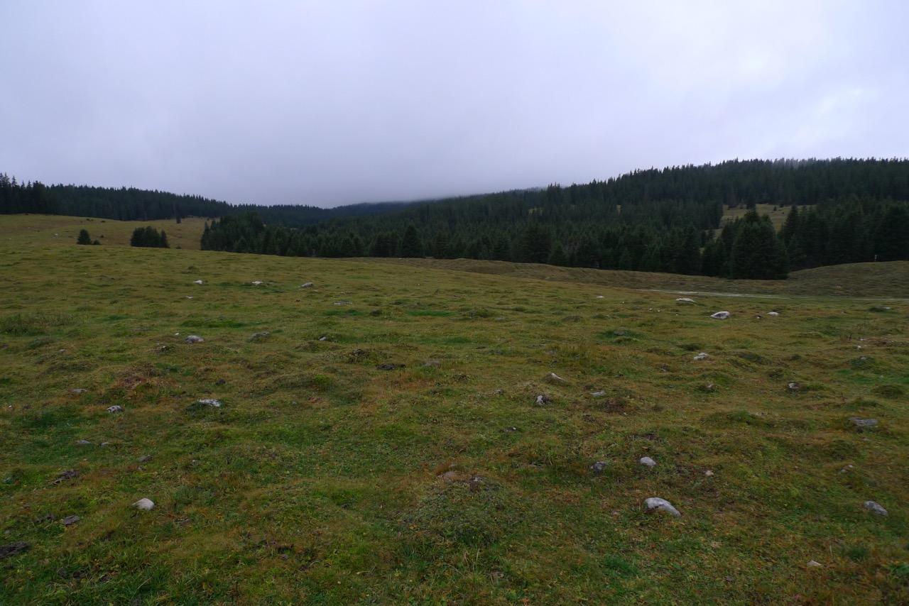 Juraweiden und -wälder auf dem Weg nach Le Brassus
