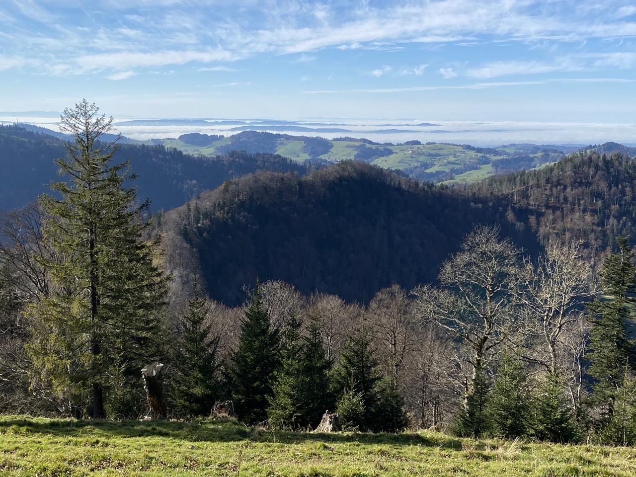 Blick Richtung Zürcher Oberland