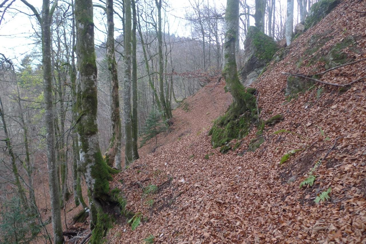 Im steilen Buchenwald unterwegs