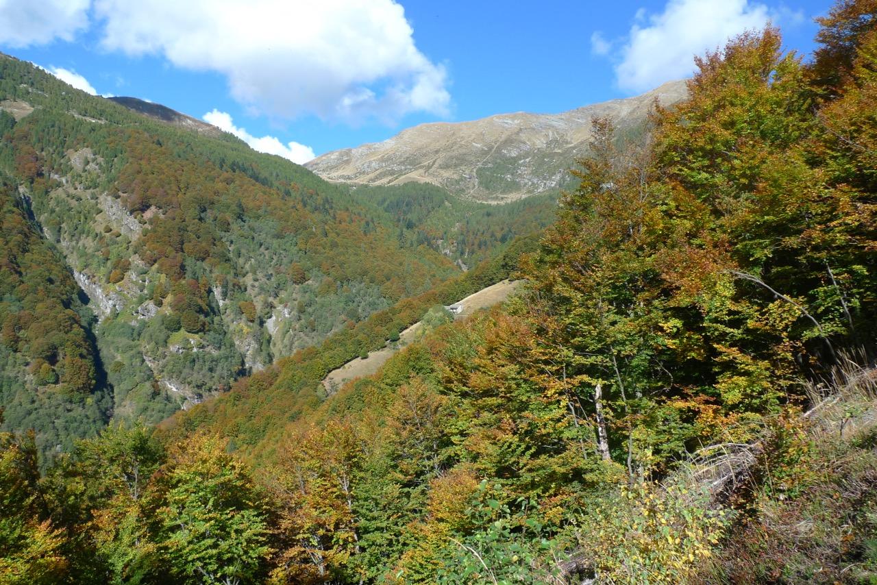 Im herbstlichen Wald hoch über dem Ri di Vergeletto