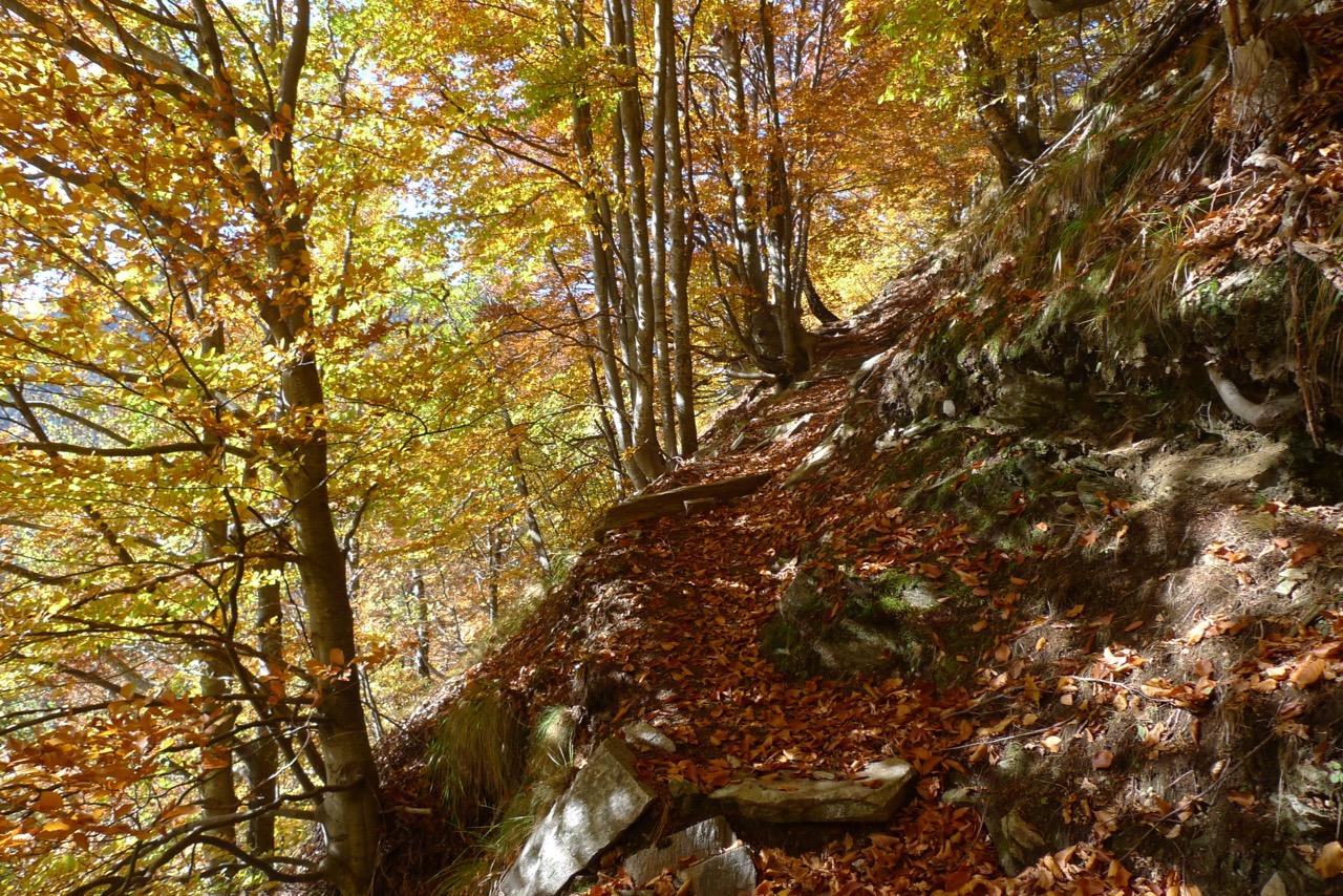 Herbstlich leuchtende Buchenwälder