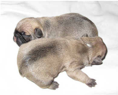 Austin und Apache, 1 Tag nach der Geburt