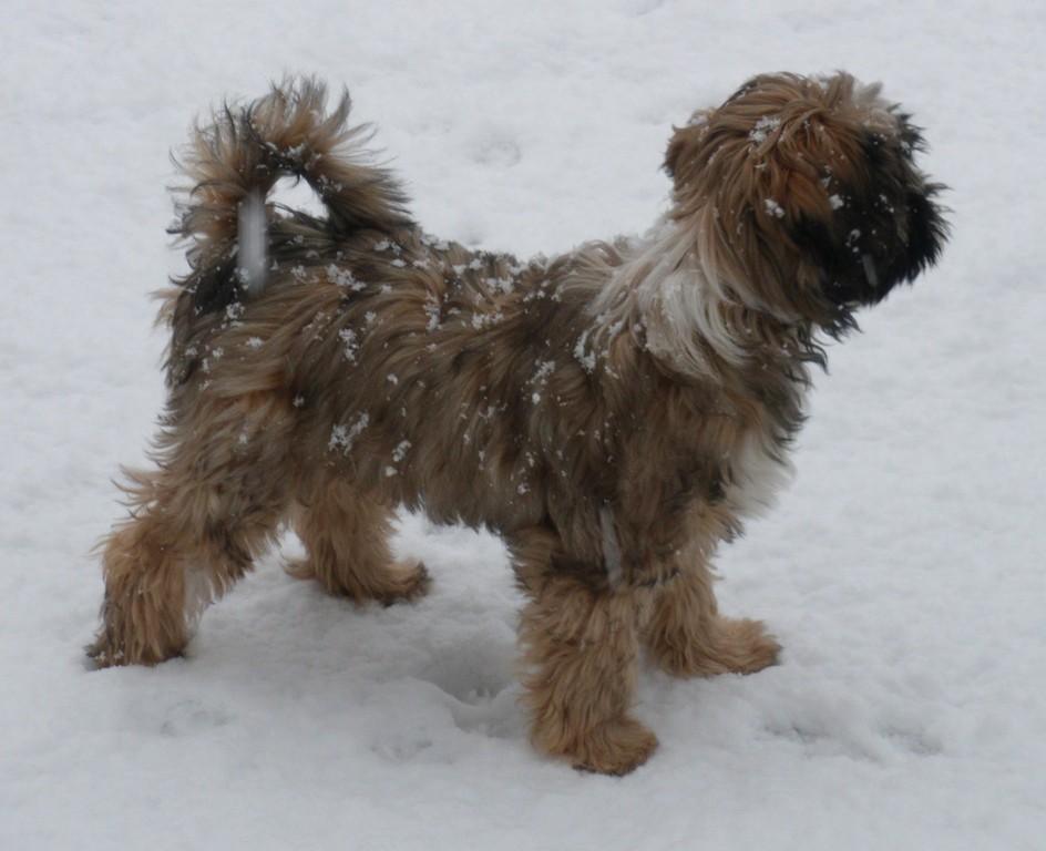 27.3.09 Wow Schnee!!!