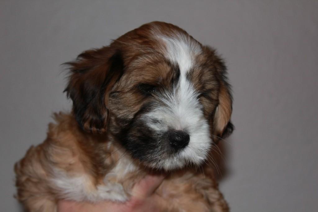 14.01.2011 Oskar