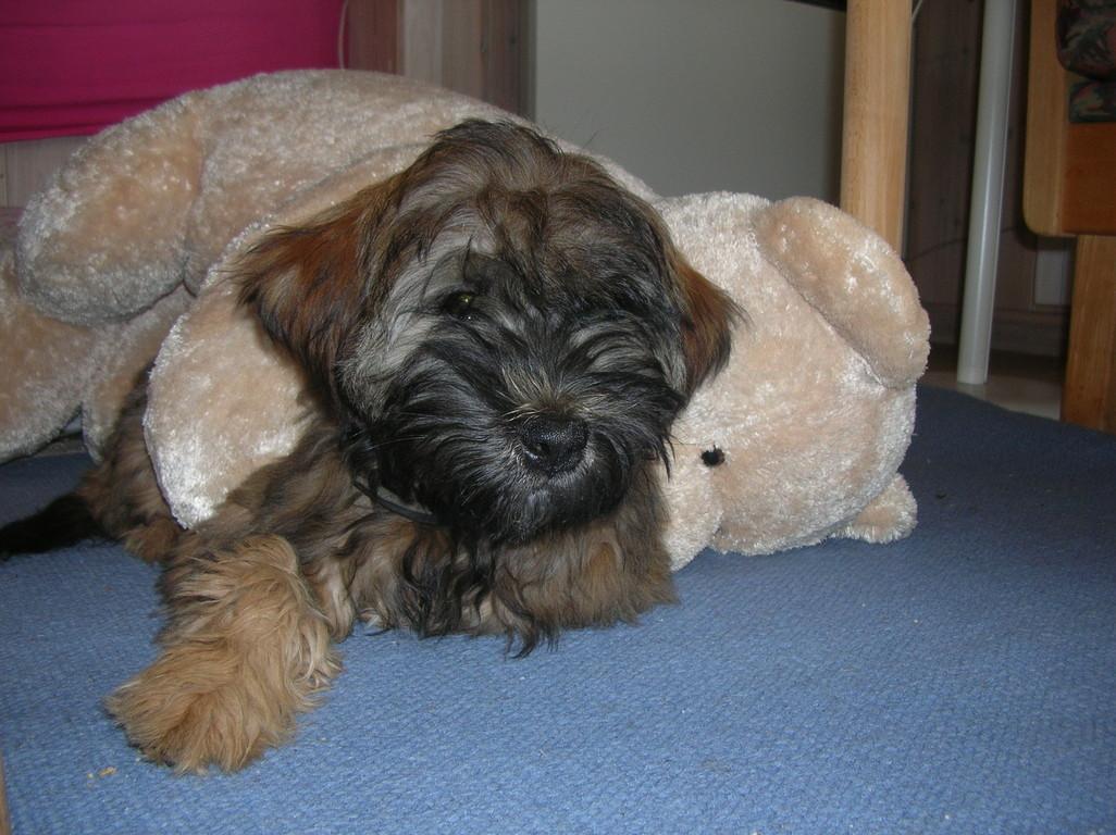 ... ich und mein Teddy!