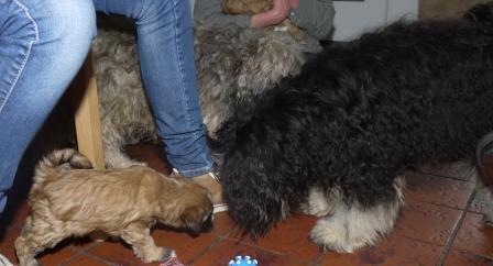 28.12.2010 Halbschwester Bija zu Besuch