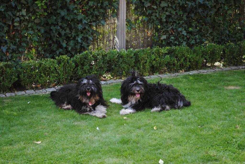 Bodhi's und Bija's 1. Geburtstag!       August 2010