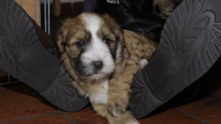 28.12.2010 Oskar