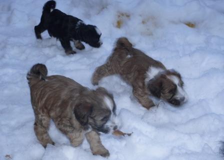 31.12.2010 Der erste Schnee, juhuuuu...