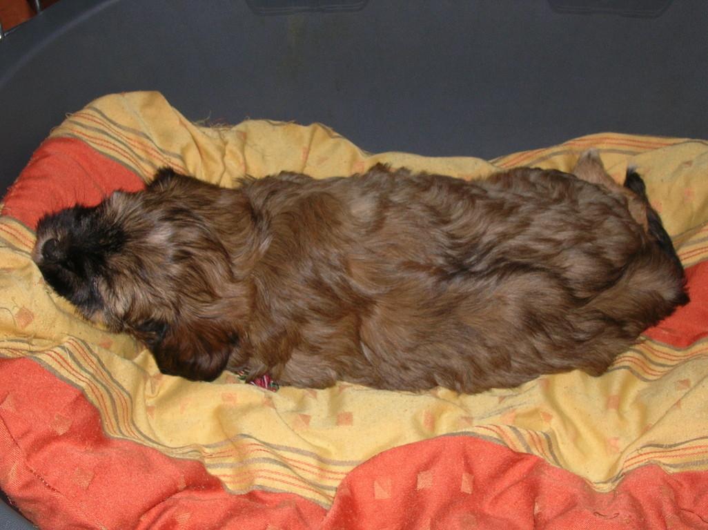 03.12.08 A'Emma hatte leider Schlafbedarf während der Fotosession - unser Goldzöbelchen...