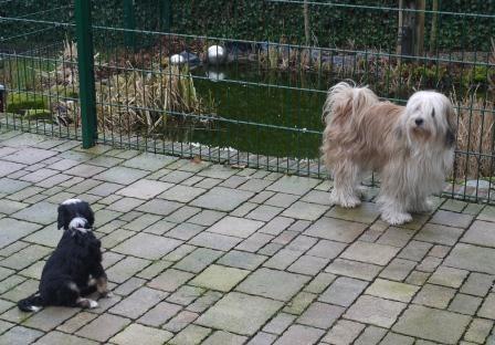 22.01.2011 Chimpu und Cima - Hey lauf doch nicht weg?!?