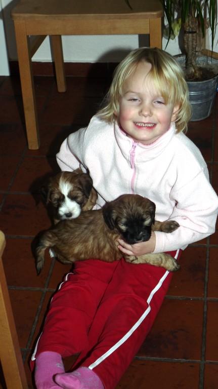 27.12.10 Dana mit Cooper und Oskar