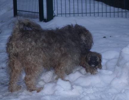 31.12.2010 Der erste Schnee, Mama passt gut auf!