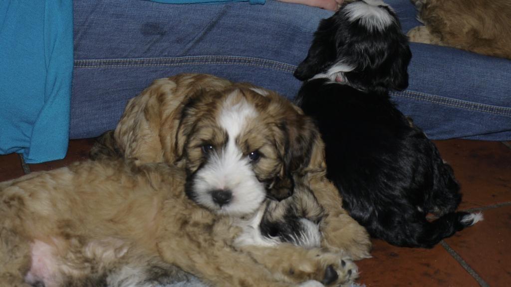 8.1.11 Manuela hat ein Händchen für Hunde...