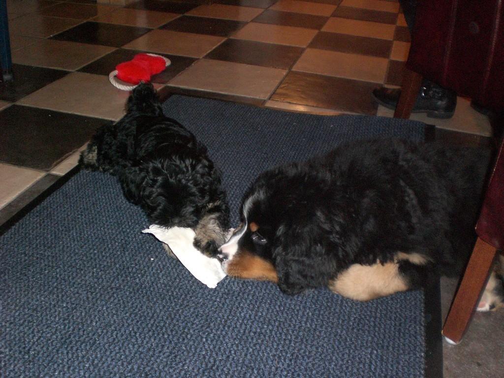 07.01.09 Atisha und ihr neuer Spielgefährte...