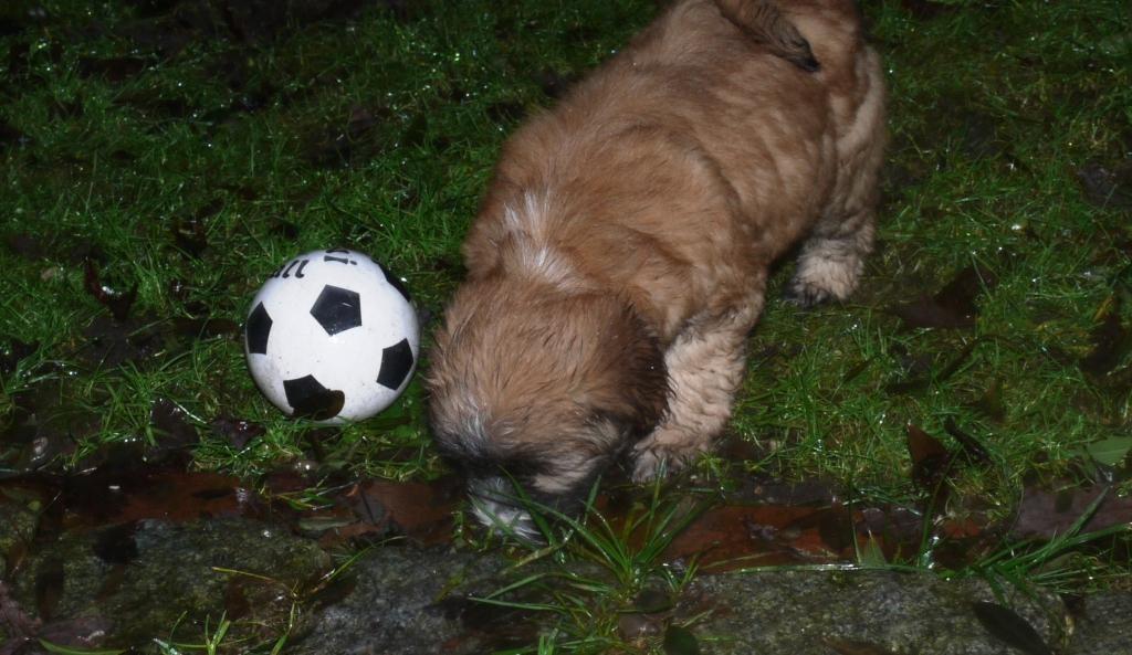 13.1.11 Lilly wird Fussballstar...
