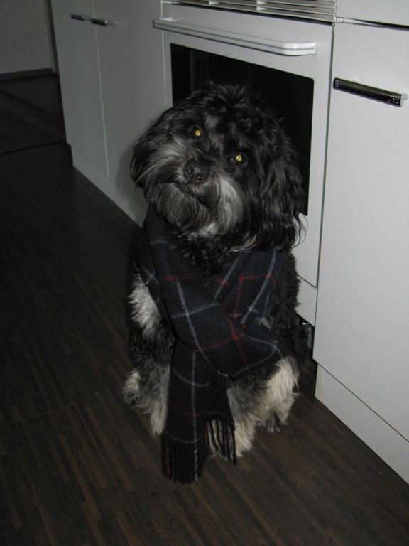 Dusty hat Husten - Dezember 2009