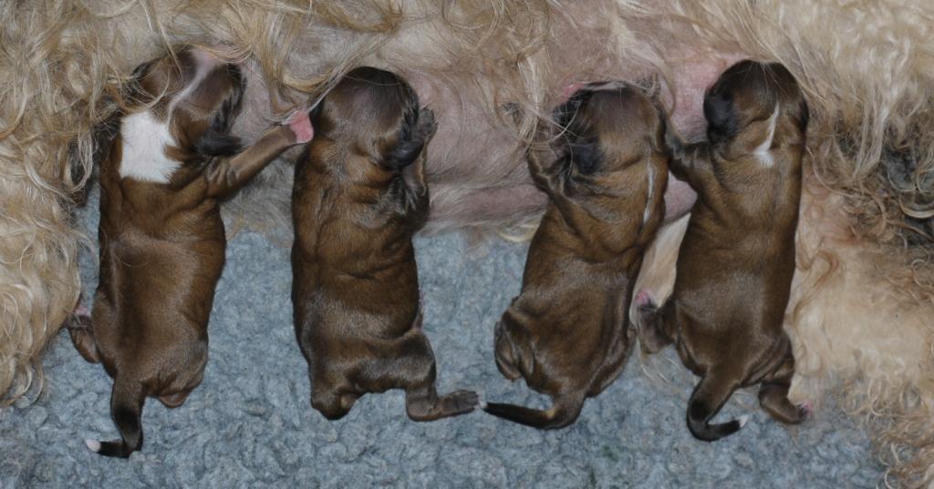 Hier sind die drei Jungs und das zobelfarbene Mädchen (2. von rechts!) zu sehen!