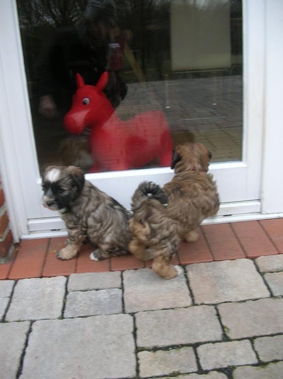 06.12.08 Aiko und A'Emma wollen wieder rein ins Haus...