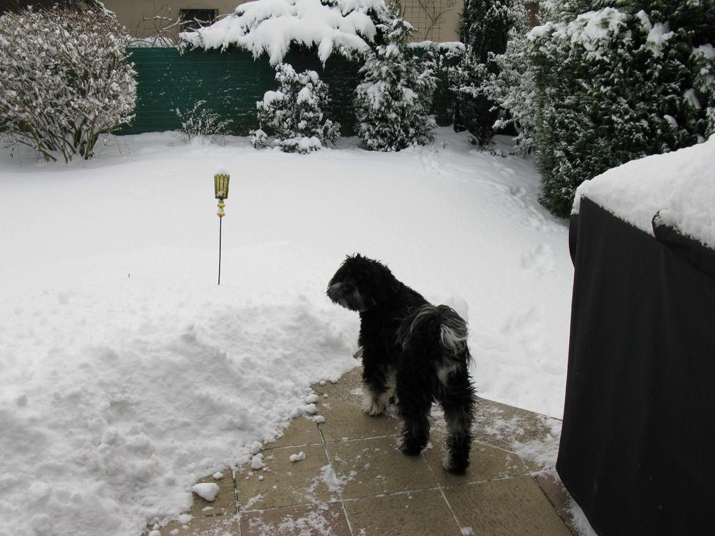 Boooh - Schnee!!!