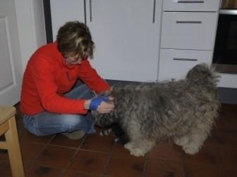 14.01.2011 Cima-Momo hat Besuch!