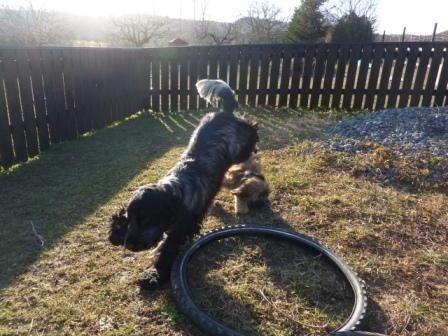 09.022011 Cooper und Freund Calle beim wilden Spiel!