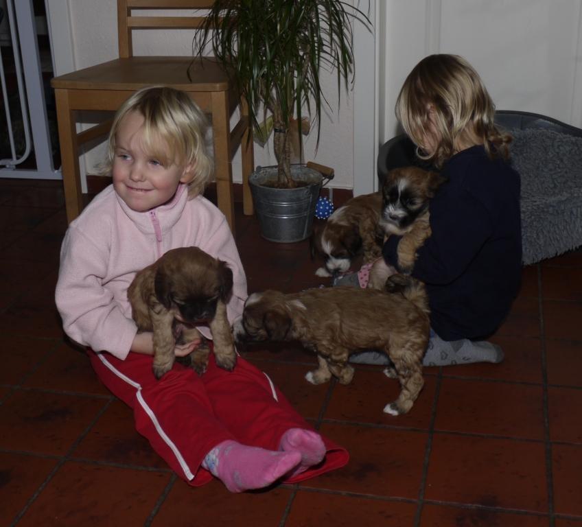 27.12.10 Ilma und Dana mit allen Welpen...