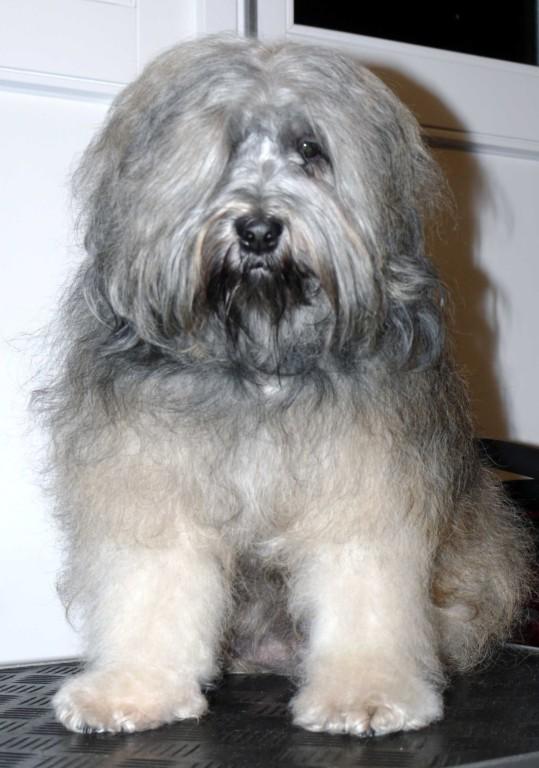 Chori im Dezember 2009