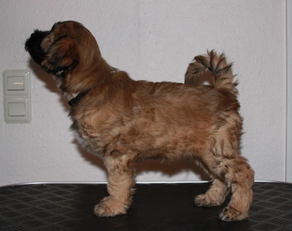 14.01.2011 Cooper